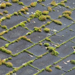 Couverture shingle nécessitant un traitement anti-mousse.