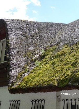L'entretien régulier et le nettoyage de la toiture en chaume est indispensable.